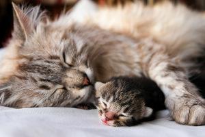 katzenmutterglück